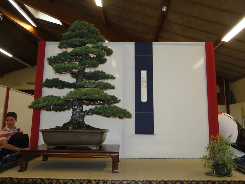 Salon national du bonsaï - Parc Oriental de Maulévrier 10 et 11 septembre  - Page 2 Dsc09828