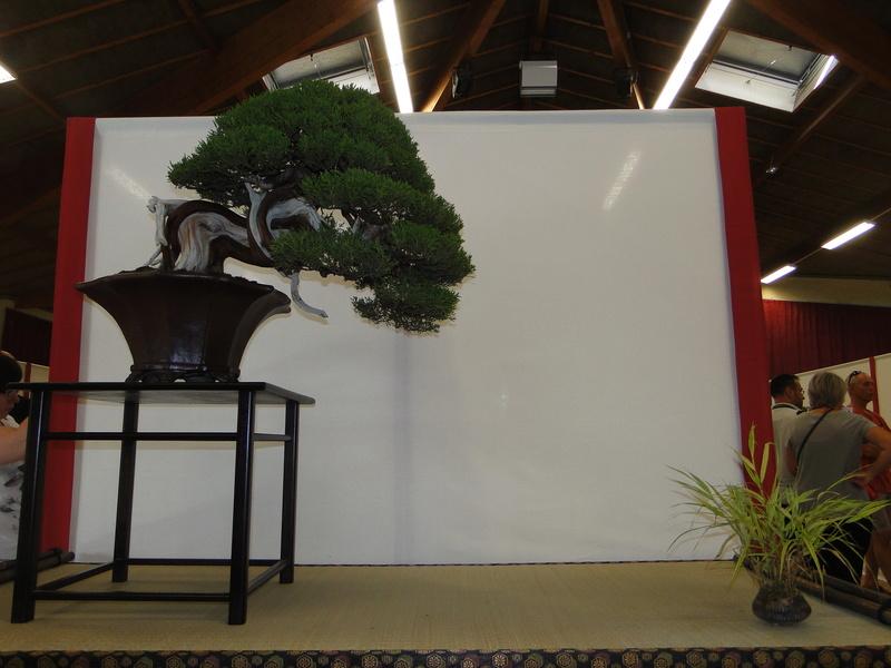 Salon national du bonsaï - Parc Oriental de Maulévrier 10 et 11 septembre  - Page 2 Dsc09829