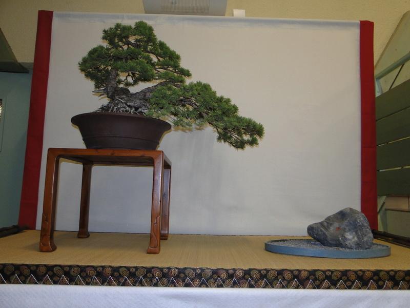 Salon national du bonsaï - Parc Oriental de Maulévrier 10 et 11 septembre  - Page 2 Dsc09830