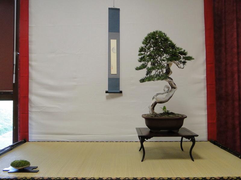 Salon national du bonsaï - Parc Oriental de Maulévrier 10 et 11 septembre  - Page 2 Dsc09831