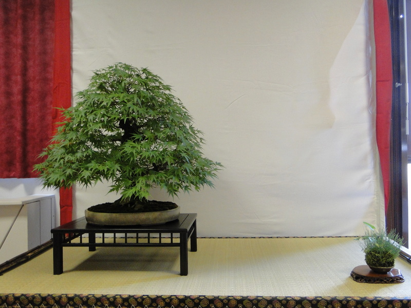 Salon national du bonsaï - Parc Oriental de Maulévrier 10 et 11 septembre  - Page 2 Dsc09832