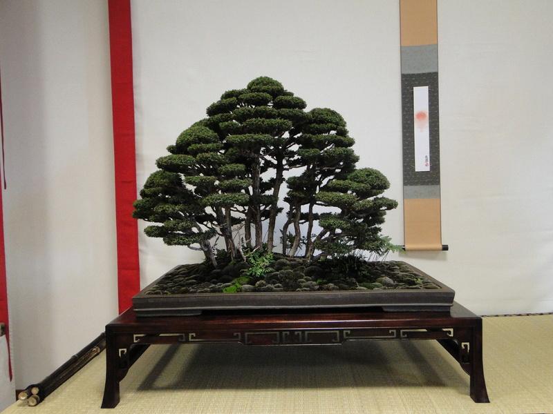 Salon national du bonsaï - Parc Oriental de Maulévrier 10 et 11 septembre  - Page 2 Dsc09833