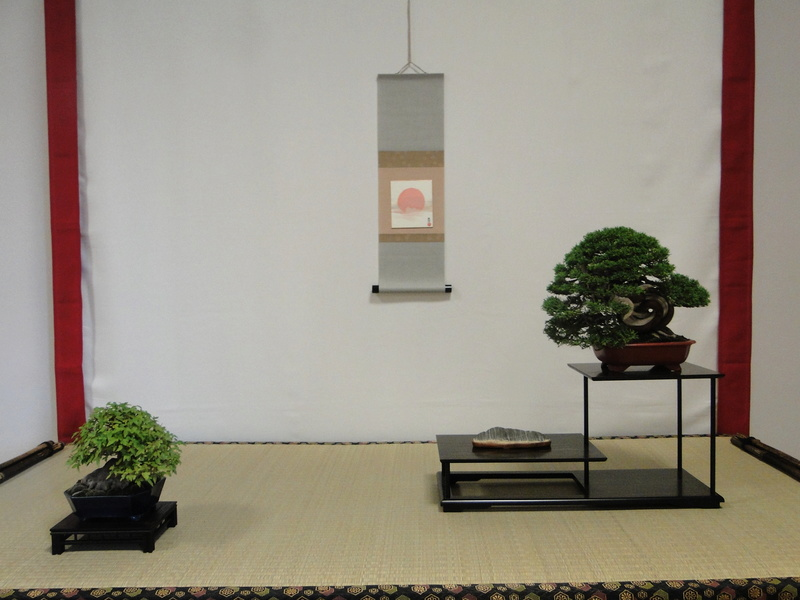 Salon national du bonsaï - Parc Oriental de Maulévrier 10 et 11 septembre  - Page 2 Dsc09834