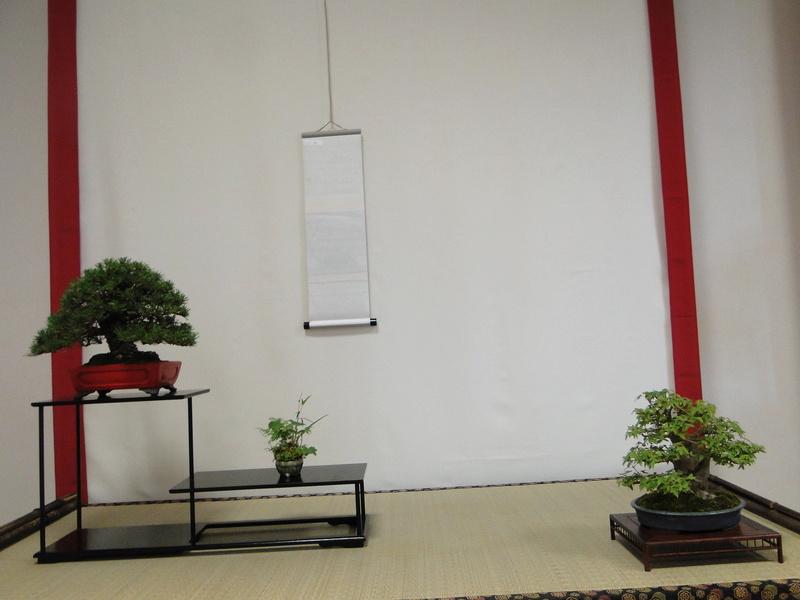 Salon national du bonsaï - Parc Oriental de Maulévrier 10 et 11 septembre  - Page 2 Dsc09835
