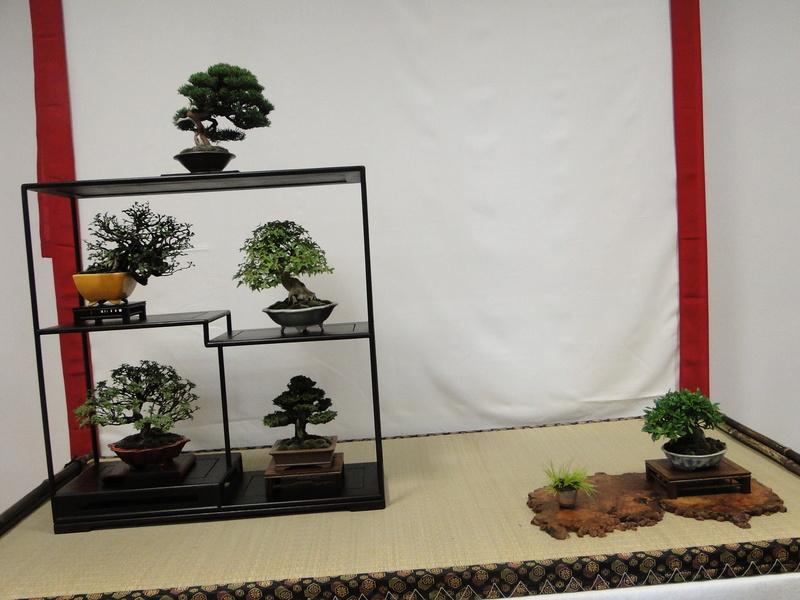 Salon national du bonsaï - Parc Oriental de Maulévrier 10 et 11 septembre  - Page 2 Dsc09911
