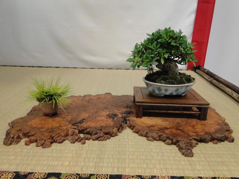 Salon national du bonsaï - Parc Oriental de Maulévrier 10 et 11 septembre  - Page 2 Dsc09912