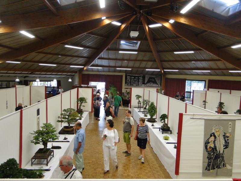 Salon national du bonsaï - Parc Oriental de Maulévrier 10 et 11 septembre  - Page 2 Dsc09914