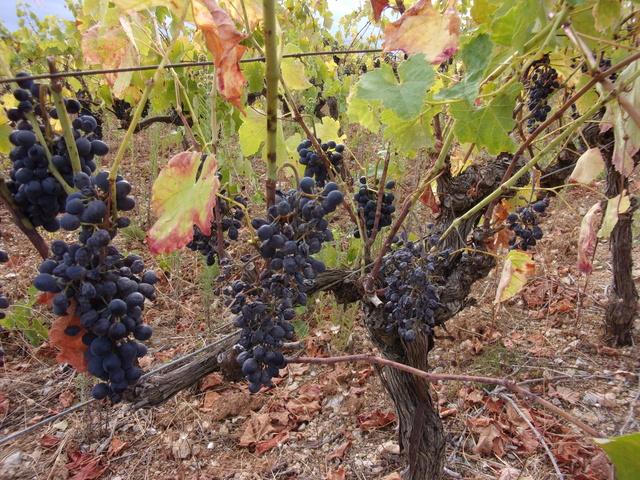 Avez-vous une vigne ? - Page 2 106_0046
