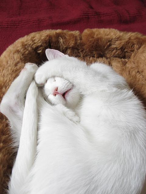 bonzour bonne zournée et bonne nuit notre ti nid za nous - Page 39 Chat_b10