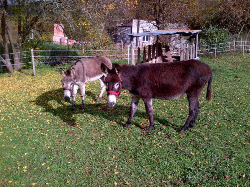 ERNESTINE - ONC âne née en 2011 - adoptée en février 2017 par Cécile Img-2010