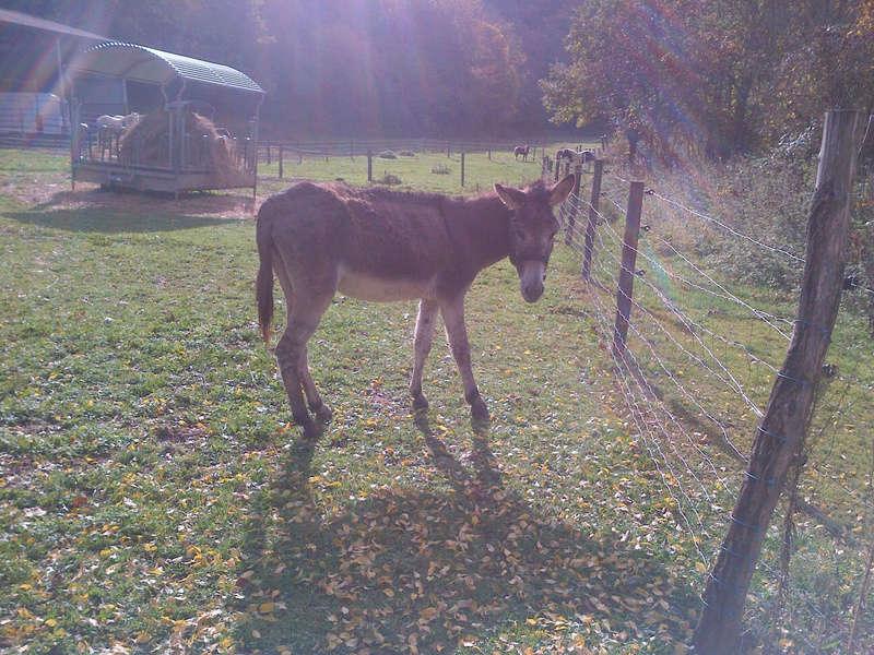 ADELE - ONC âne née en 2009 - décédée avant son adoption, en février 2017 Saint-10