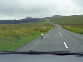 Vacances à Dartmoor National Park Dsc08210
