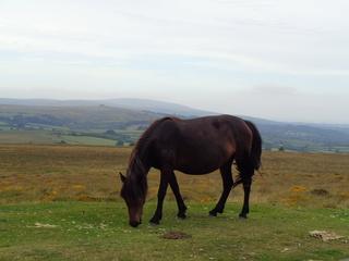 Vacances à Dartmoor National Park Dsc09010