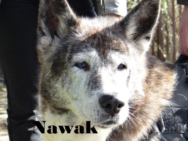 Au revoir Nawak  Nawak10