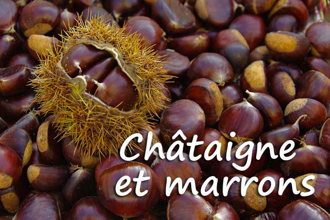 Photos - Nature qui nous enchante - Page 2 Chytai10