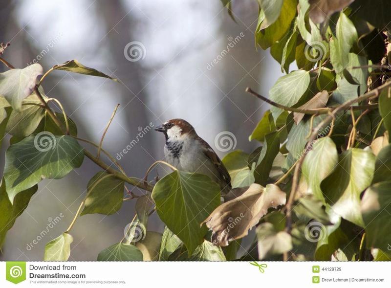 Tous les plus beaux poèmes  Oiseau10