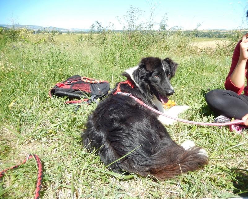 BABEL (mâle croisé berger) 1dscn211