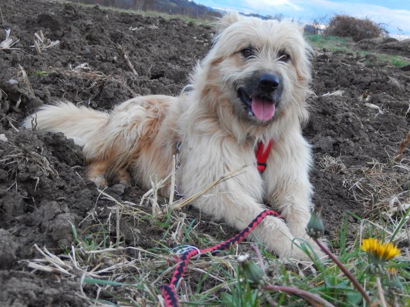FARFADET (chien croisé labry) 1dscn213