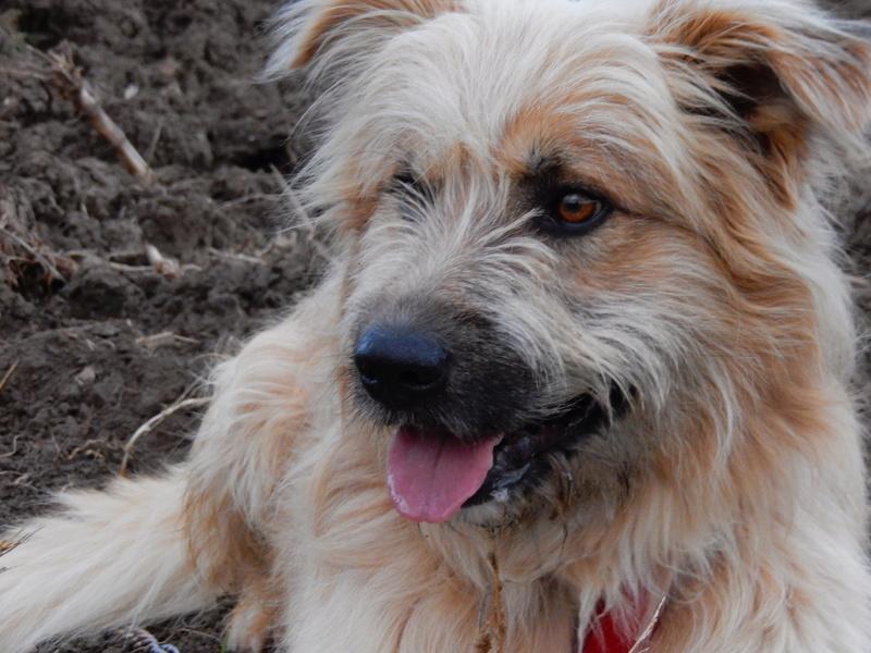 FARFADET (chien croisé labry) 5dscn212