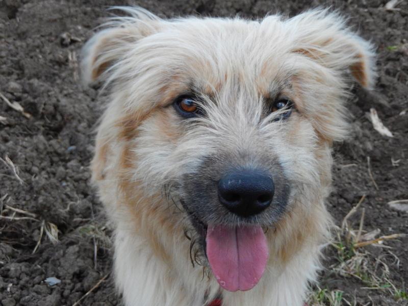 FARFADET (chien croisé labry) 9dscn210