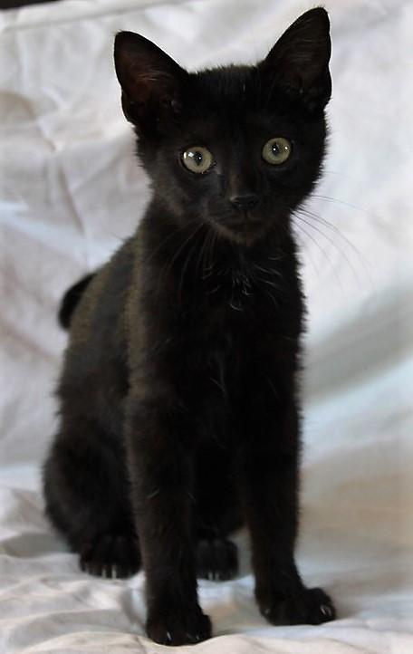 Mimie, petite douceur noire, née le 29/05/2016 Img_1316