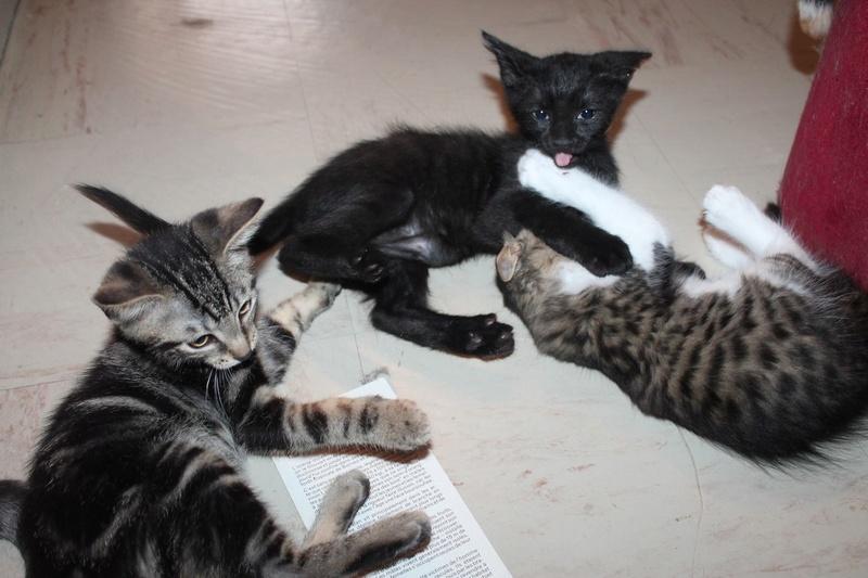 Merlin, noir et Margot (devenue Méone) adoptés ensemble dans la même famille ! Img_3810