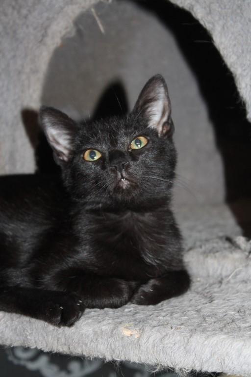 Mimie, petite douceur noire, née le 29/05/2016 Img_4310