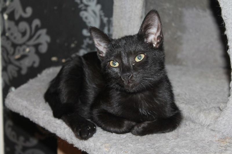 Mimie, petite douceur noire, née le 29/05/2016 Img_4311