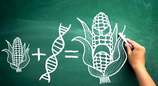 Pourquoi refuser les OGM agricoles 314