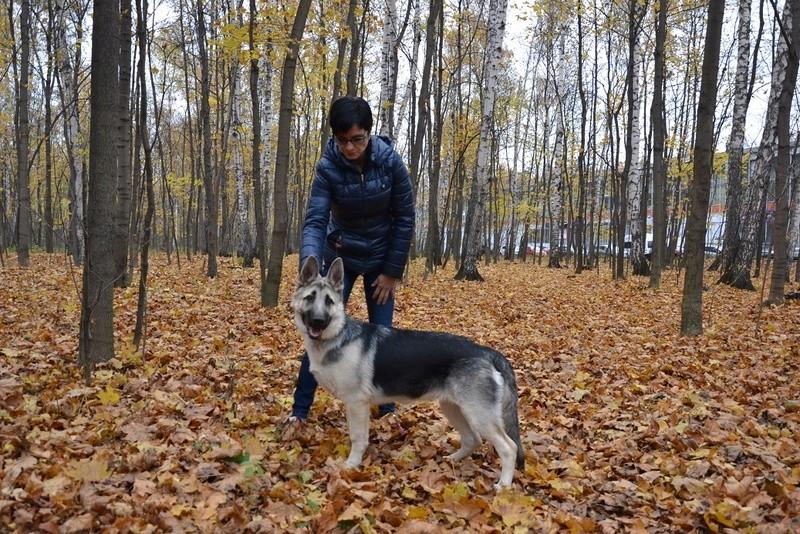 "22-10-2016 ""Кубок Боба Бремптона 2016"" САСIB-«VIP DOG ШОУ-2016» Dsc_1512"