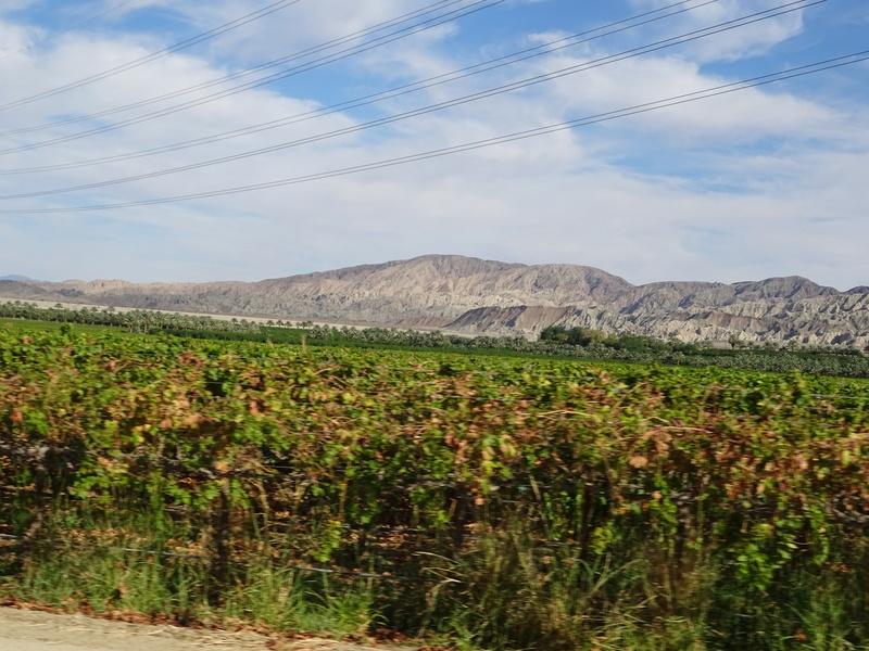 quelques photos prises dans le desert Dsc05213