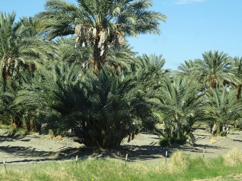 quelques photos prises dans le desert Dsc05214