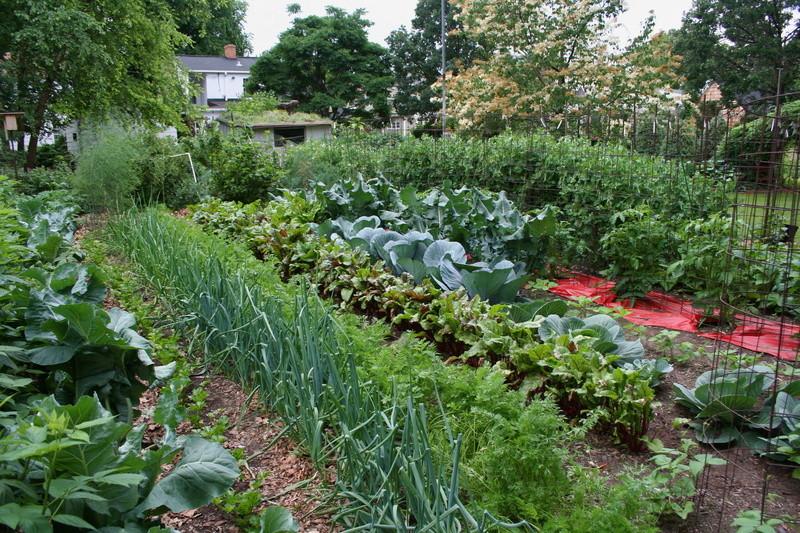 Сад и огород 145