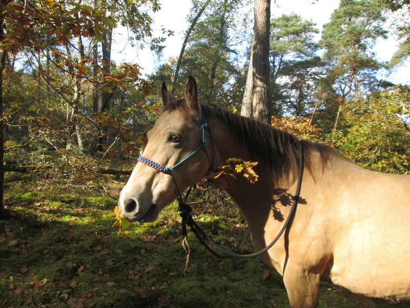 CONCOURS PHOTOS : le cheval et l'automne Img_1123
