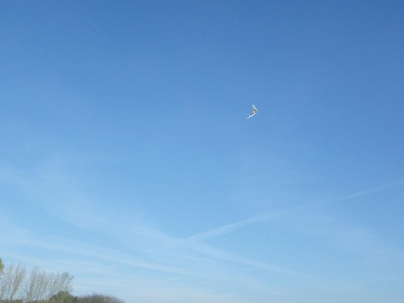 Sunday morning free flight Imgp1317