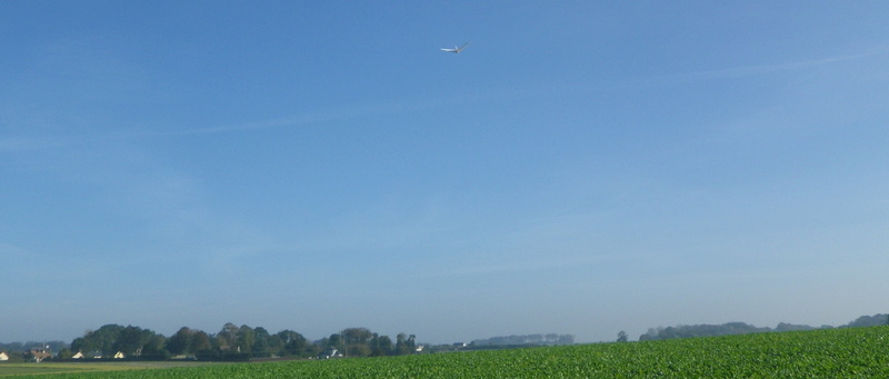 Sunday morning free flight Imgp1318