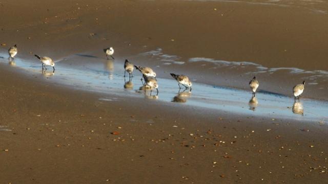Le Porge Ocean dans toute sa splendeur vu par Yves Boutsdebois 14232410