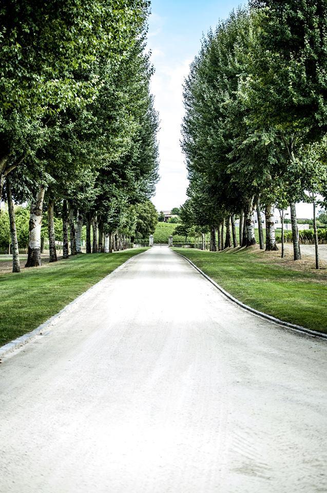 Château Lafite Rothschild vu par Pierre Revelle  14317410