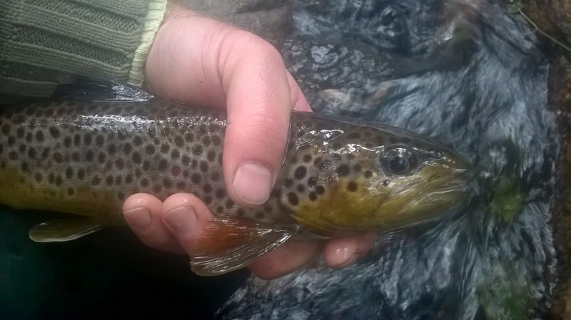 Votre pêche salmo de septembre  Truite10