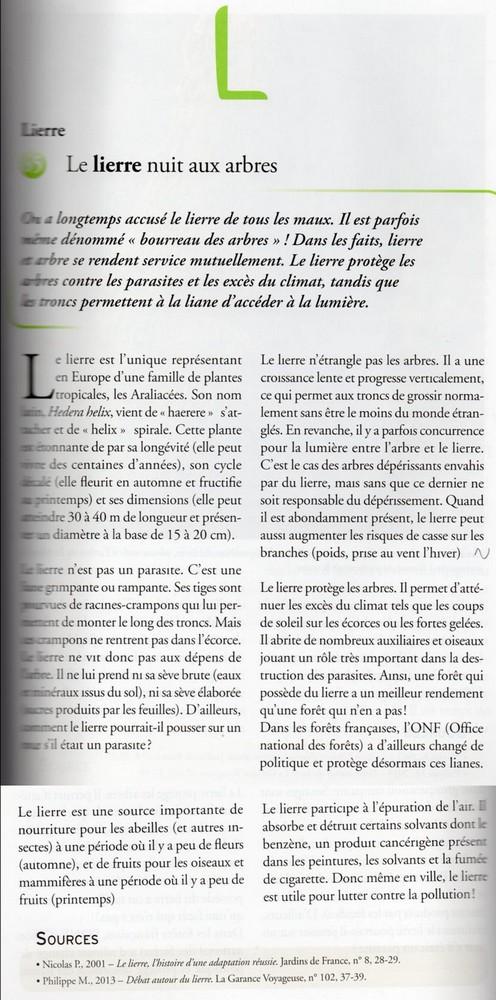 Hedera - lierre - espèces, hybrides horticoles - Page 4 Lierre10