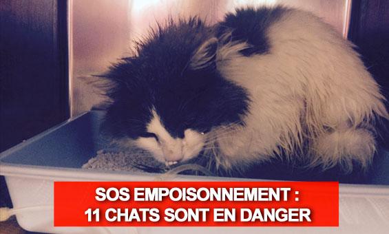 Chaîne de solidarité clic animaux - Page 40 5a4e5c10