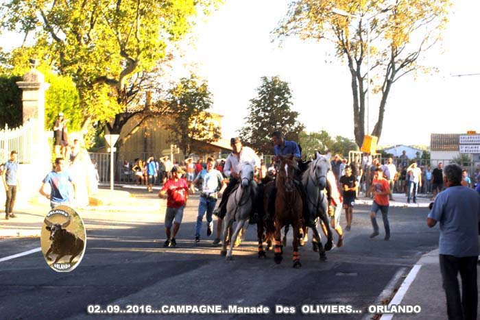 02..09..2016...  CAMPAGNE...Manade  Des  OLIVIERS _mg_0011