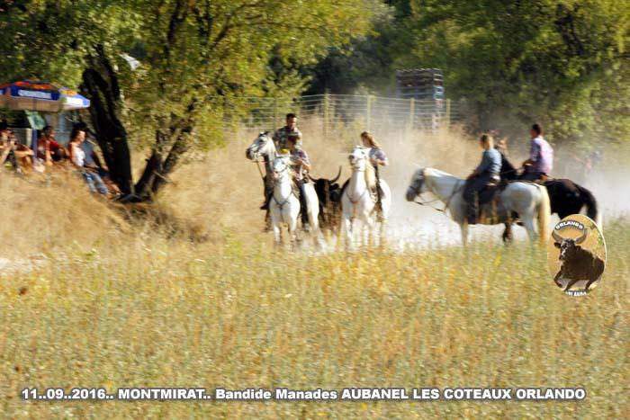 11..09..2016..montmirat  Manade les Coteaux et Aubanael Bandide _mg_0022