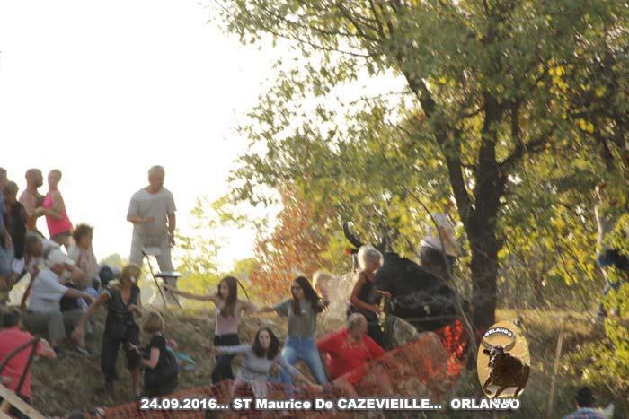 24..09..2016..St Maurice De Cazevieille avec  3 Manades _mg_0112