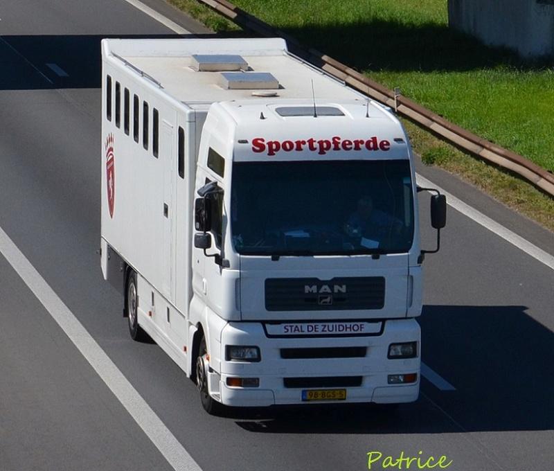 Transports de chevaux - Page 7 3110