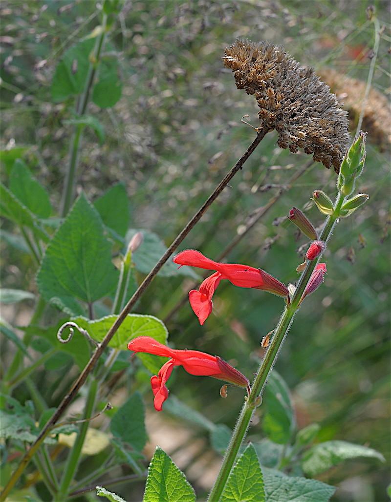 ondées d'octobre, le jardin renaît Copia_12