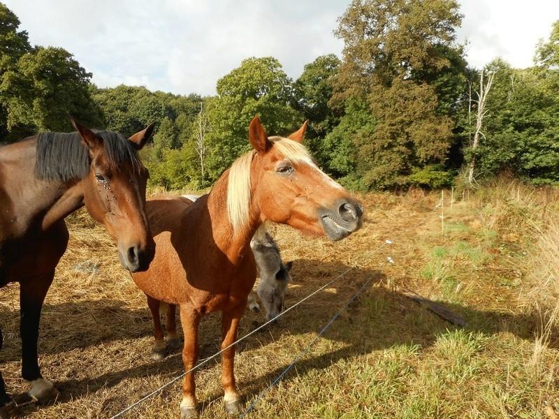CÂLINE de JAULDES – Poney née en 1990 – devenue protégée GPLV en septembre 2017 Dscn2162
