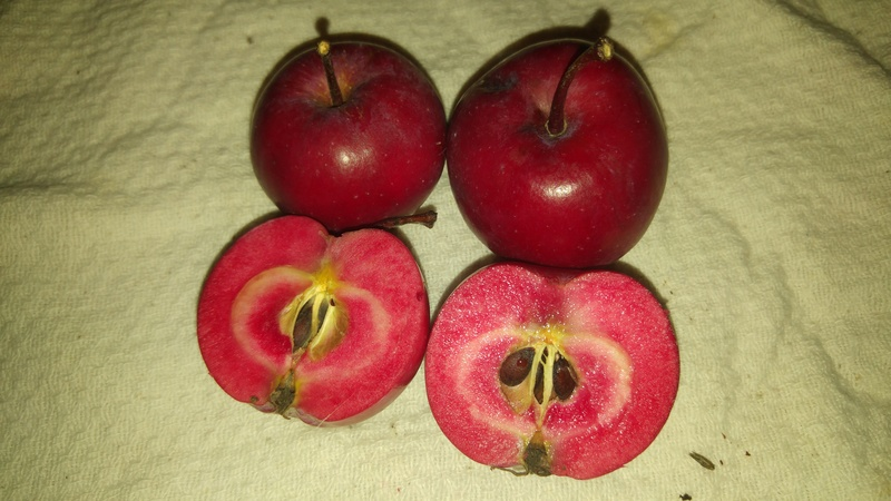Was für Obstsorten habt Ihr denn im Garten? Aussaat, Spalier, Beerensträucher, Erfahrung und Hilfe :) - Seite 11 20160911