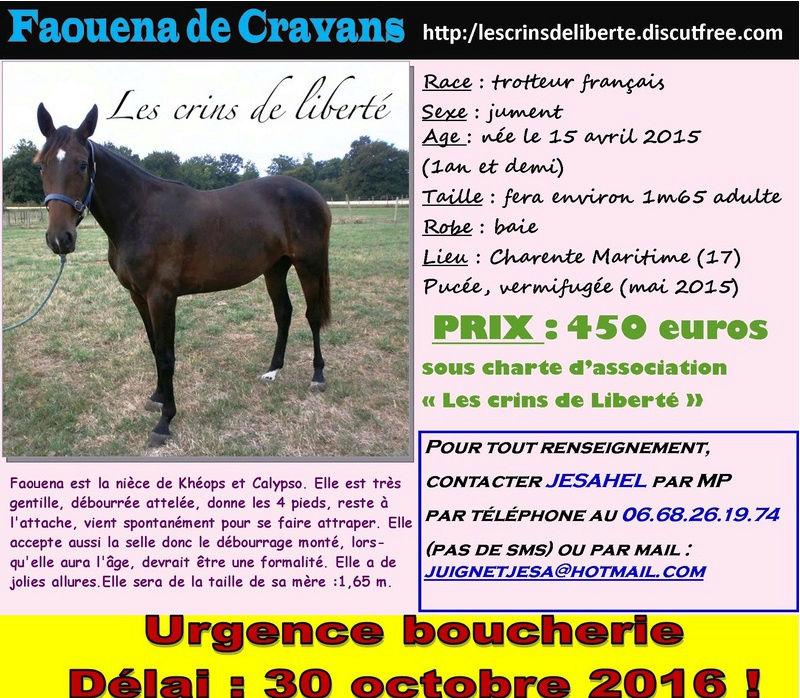 Dpt 17, TF, Faouena de Cravans et Élodie ! (Octobre 2016) Faouen10