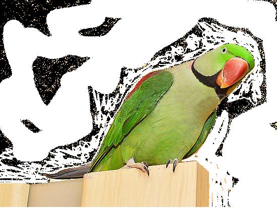 Photos d'oiseaux sur fond blanc K1262410